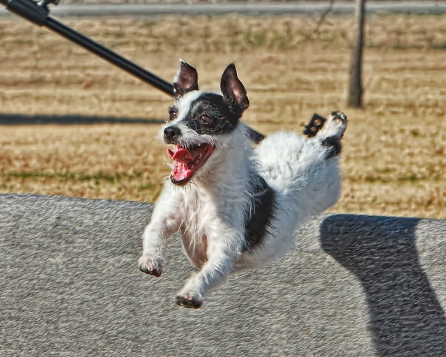 happy jumping dog