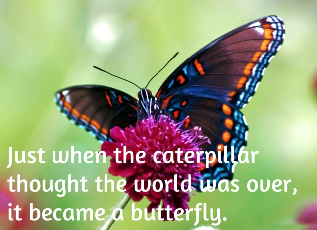 caterpillar turns to butterfly