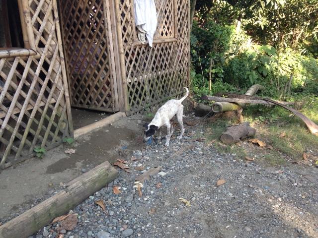 roaming dog